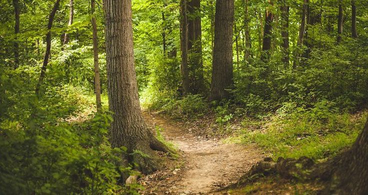 The forest is the best place for a scavenger hunt! Our Ideas for Tasks to Spice Up Your Birthday or Walk!