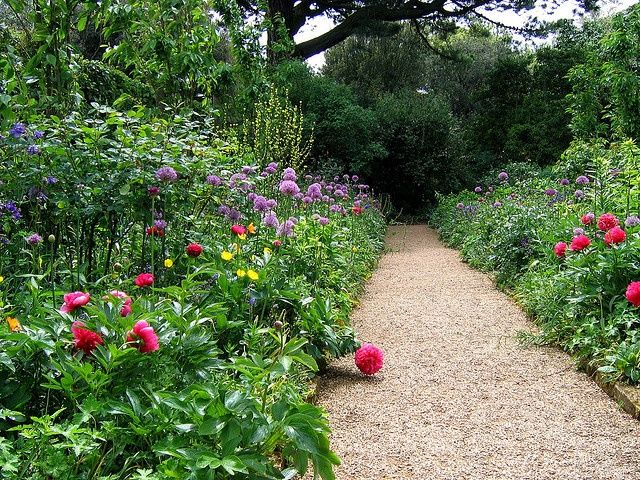 Pea Stone walk with all kinds of border plantings.