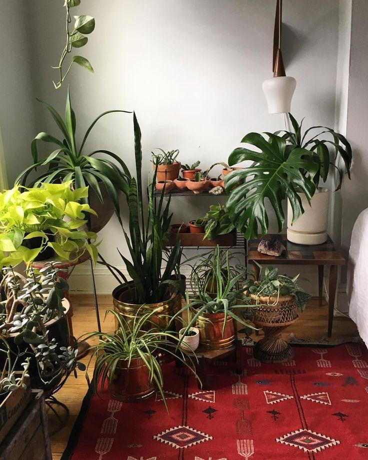 Les 12937 meilleures images du tableau urban jungle for Plante jungle
