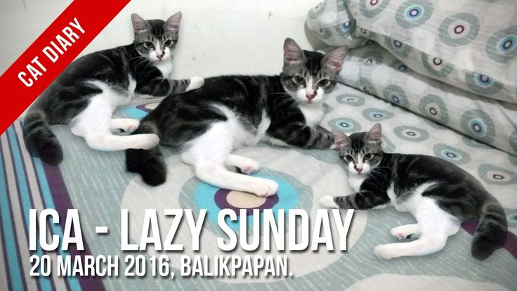 [Cat Diary] : Ica - Lazy Sunday