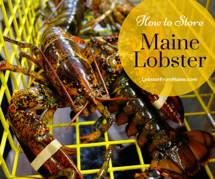How to store live and frozen maine lobster how to thaw