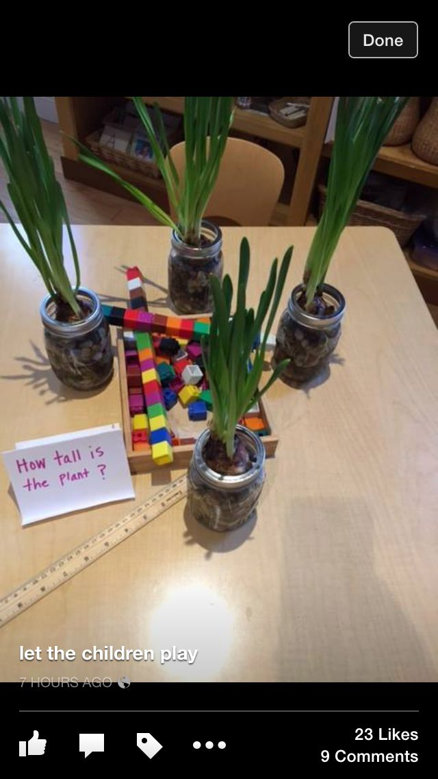 measure and graph plant growth with unifix cubes