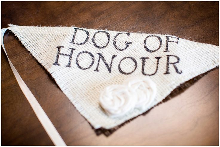 wedding dog collar idea