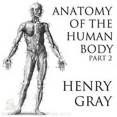 Human Anatomy And Physiology Homework Help Saotrucbuigia