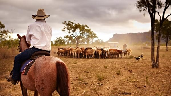 Cattle herding #outback    man oh man, I would love to do this for a day!