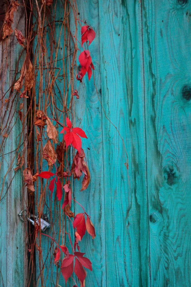 Turquoise Autumn                                                                                                                                                                                 More