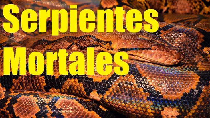 Las serpientes mas venenosas del mundo. Datos Sobra las Serpientes Morta...
