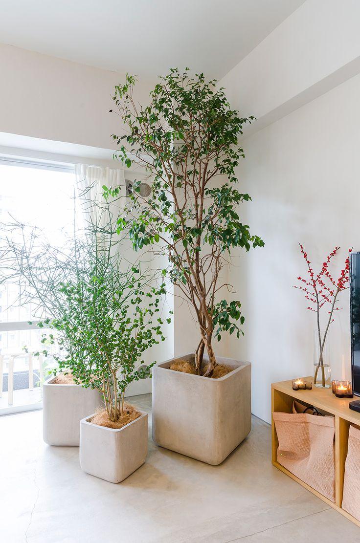 グリーンのインテリアは「Shikinowa Design」に依頼。