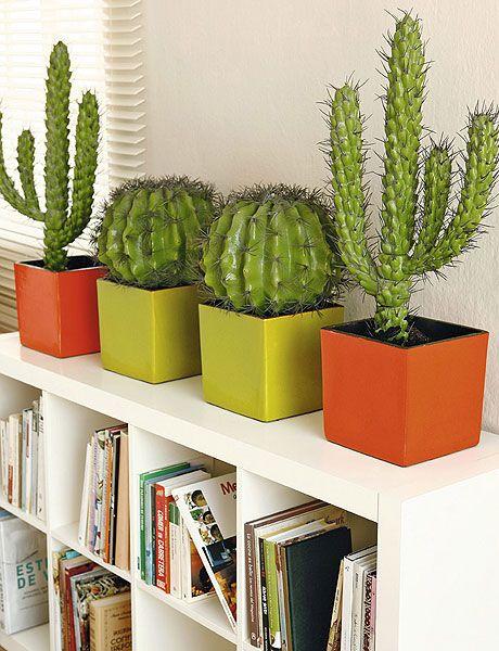 Cactus para decorar el interior