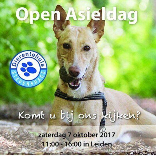 Zaterdag 7 oktober is er weer Open Asieldag in #Leiden bij @stevenshageplaatsbaredieren . Dit jaar zònder Miss Minoes-kraam! Ik zal er wel als bezoekster heengaan. Kan ik ook eens op mijn gemak rondkijken. . . . Er zijn kramen van organisaties loterij honden training demonstratie open huis en natuurlijk poffertjes! . . . #dierenasiel #adoptdontshop #kattenzijnleuk #hondenookwel #konijnenzijncool #stevenshage #openasieldag #hadikalgezegddaterpoffertjeszijn #sharingiscaring #7oktober