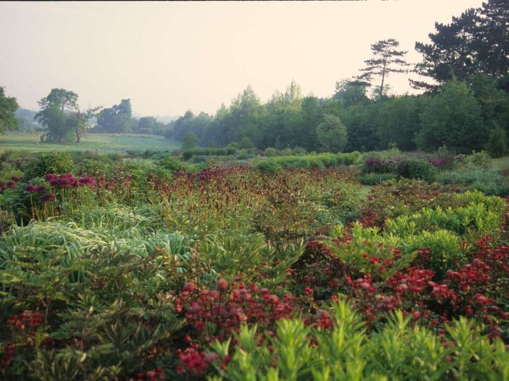 82 best piet oudolf images on pinterest landscaping for Piet oudolf favorite plants