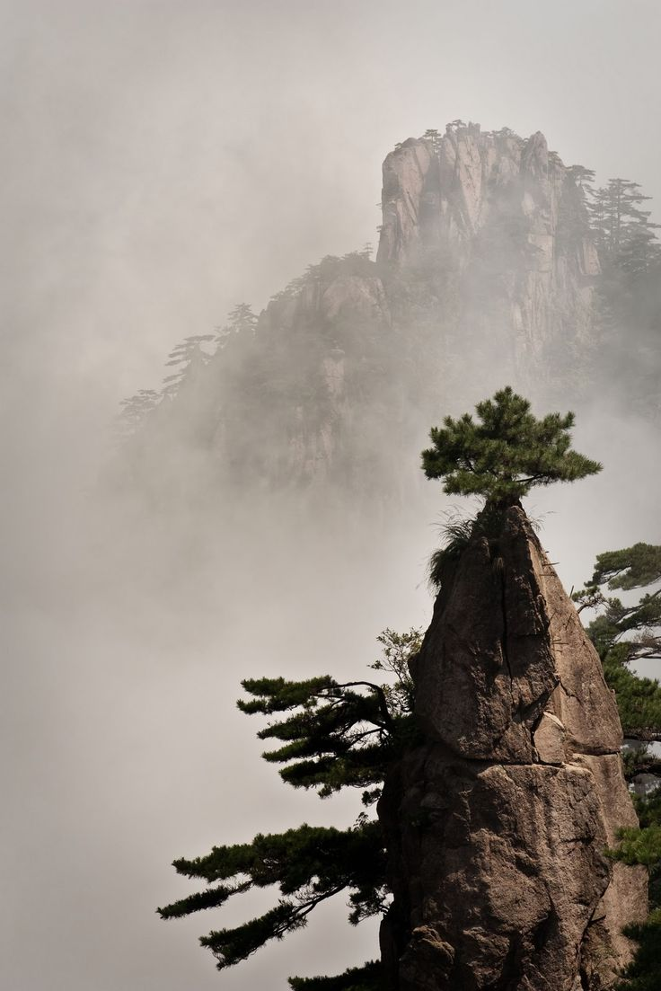 : Landscape Skyscap, Anhui China, China Mountain, Flora, Amazing Trees, Enchanted Landscape, Images Asian, Huangshan, Yellow Mountain