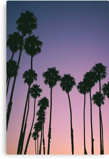 Purple Sunset Palm Trees | Canvas Print