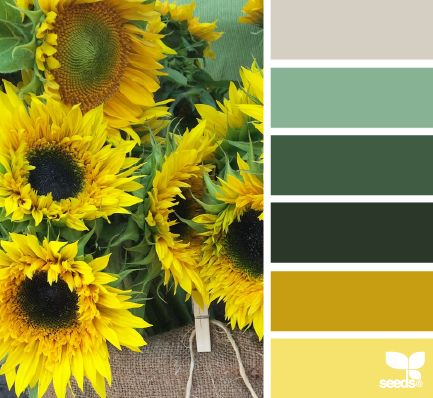 Sunflower Hues - http://design-seeds.com/index.php/home/entry/sunflower-hues