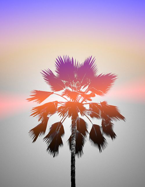 palm tree | Tumblr