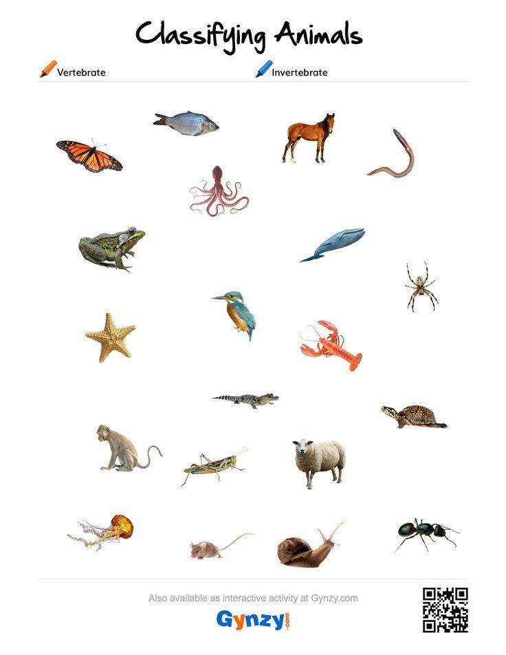 Pin By Teacher Timo On Classifying Animals Vertebrates
