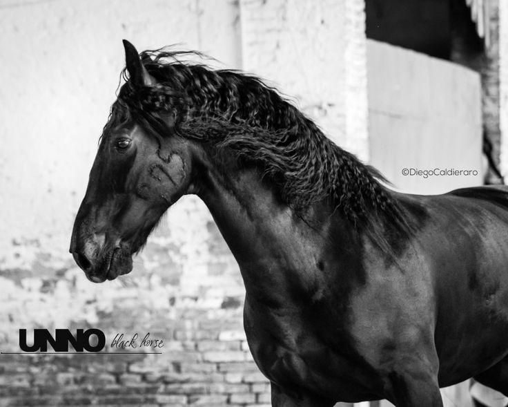 Unno #unno #blackhorse #blackbeauty #black #horses #horse #rinding #horselover #murgese #murgesepassion #animal #nature #cheval #beautiful