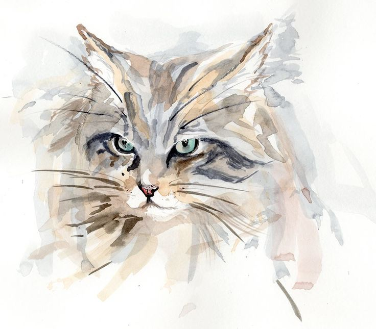 17 best images about cool art and photography on pinterest for Cool fox drawings