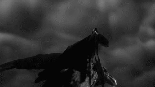 Flying Crow gifs gif cool images nature crow cool gifs black and white gifs bird gifs