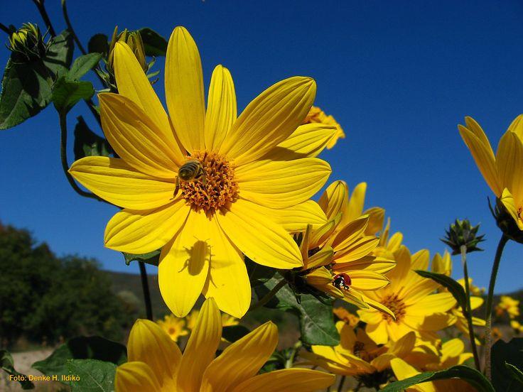 Tavasz: virágok, méhecske, katica / Spring: flowers, bee, ladybug Fotó: Denke H. Ildikó
