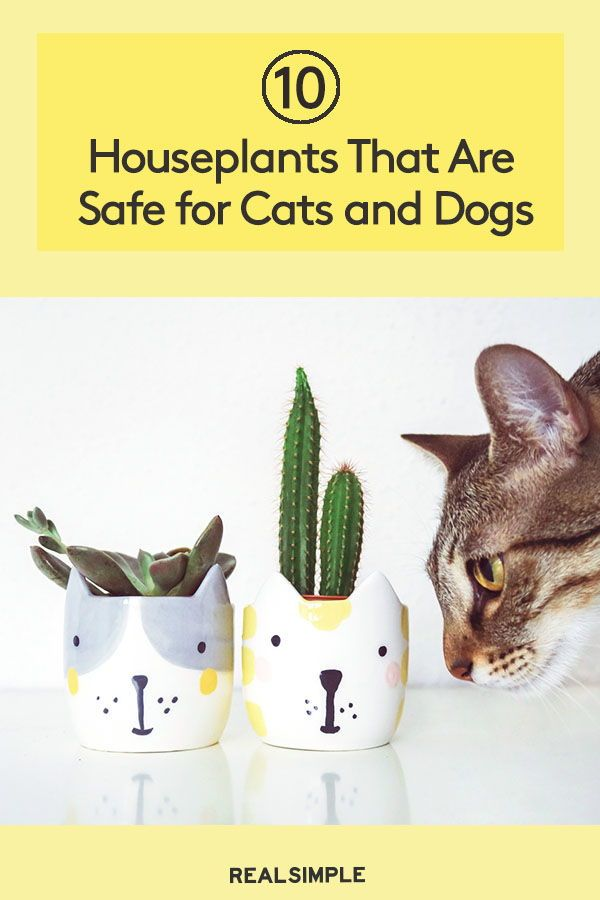 5 Trendy Houseplants That Are Toxic To Cats Lily Flower Flowers Toxic Plants For Cats
