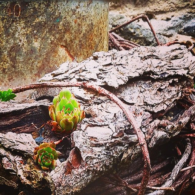 Pflanzenliebe Pflanzen Gartenideen Plants Pflanzideen Garden Garten Gartendekor Succulents Succulent Rost Rostdekoration Rostdeko Rostdeko Holz Wood Beef