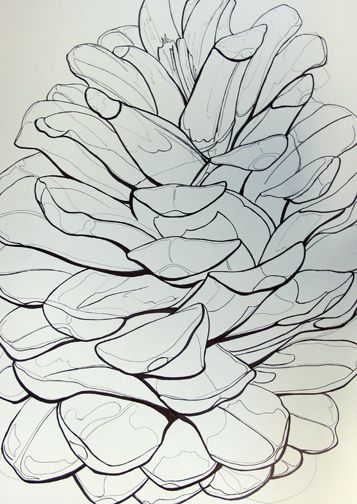 Pinecone Line drawing