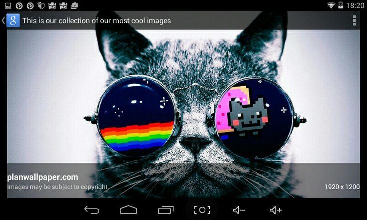 Space cat #very cool cat