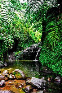 Maunawili Falls Hike, Oahu