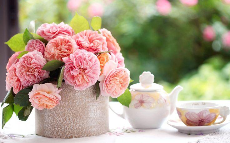 Скачать обои цветы, розы, розовые, лепестки, листья ...
