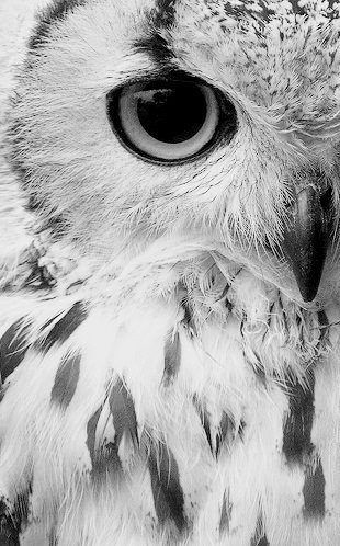 Owl. A reminder that how an image is cropped and developed can be the important…