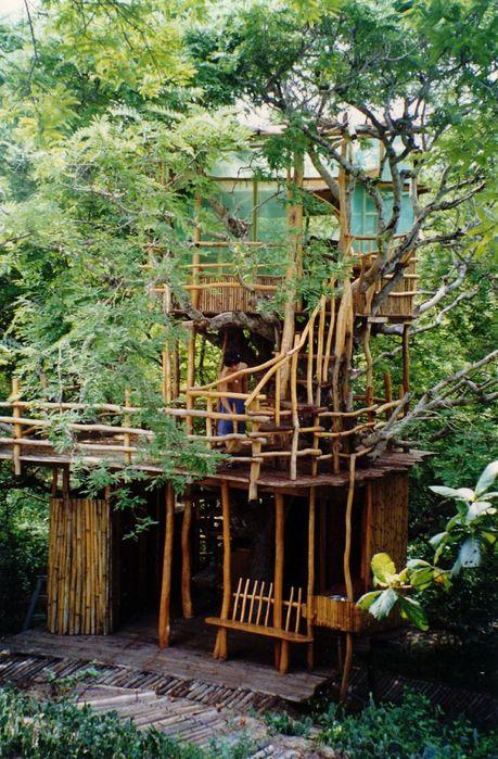 отель на дереве в Коста-Рике