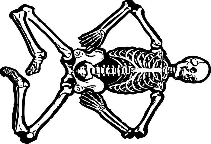 Tulang Tulang atau kerangka adalah penopang tubuh Vertebrata(yang memiliki tulang belakang). Tanpa tulang, pasti tubuh kita tidak bisa tegak berdiri. …