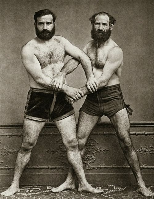 professional wrestlers or just bears?