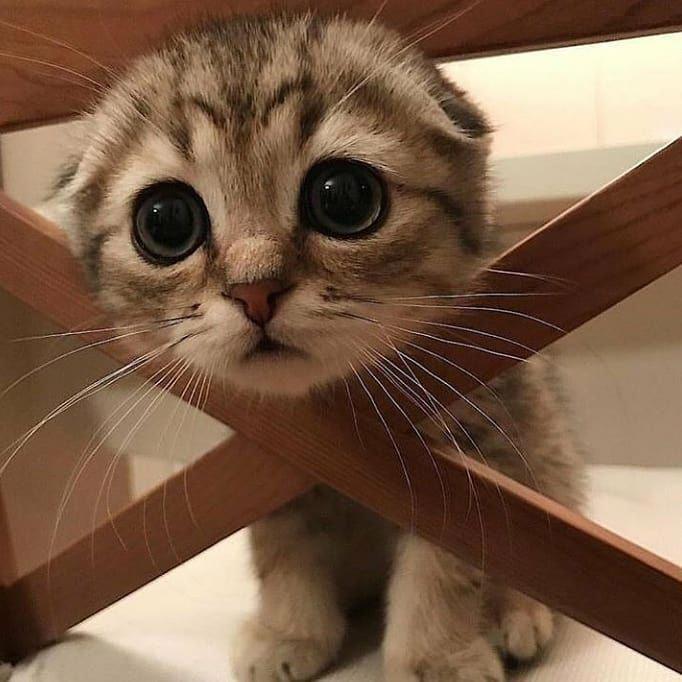 Cat Scratching Tunnel Cat Scratching Post Tree Kitten Memes Ohs In 2020 Cute Cat Gif Cute Cats Cat Love