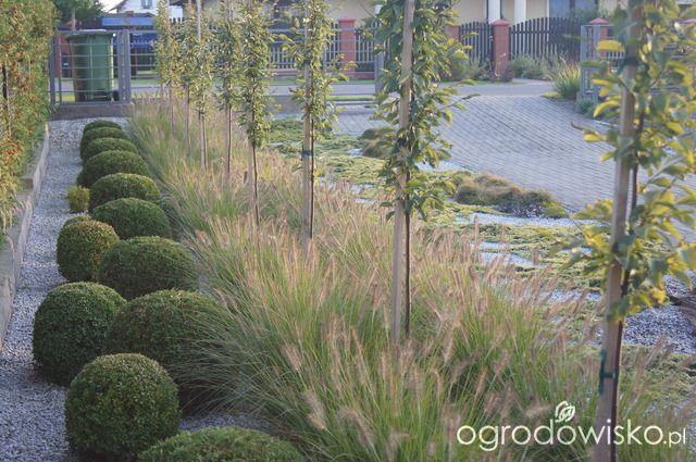 Ogród niby nowoczesny ale... - strona 1239 - Forum ogrodnicze - Ogrodowisko