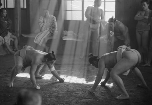 © Werner Bischof, 1951, Sumo fighters, Tokyo. S)