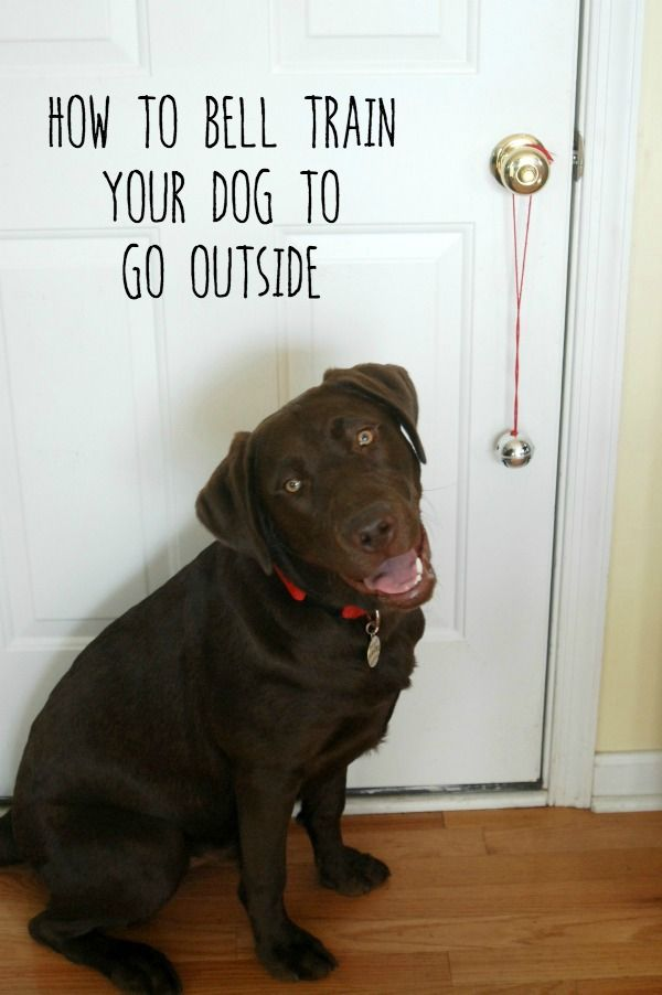 Use dog treats from @Walmart to teach your dog how to ring a bell to let you know when he has to go outside!
