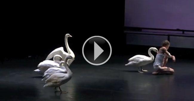"""""""""""""""El lago de los cisnes"""""""" de Chaikovski es una de las piezas de ballet más interpretadas por las compañías de todo el mundo. Representa un constante desafío e incluso en esta espectacular obra se basó una de las películas más taquilleras y ganadoras de premios en Hollywood. Pero la compañía francesa """"""""Le Guetteur"""""""" dirigida por …"""