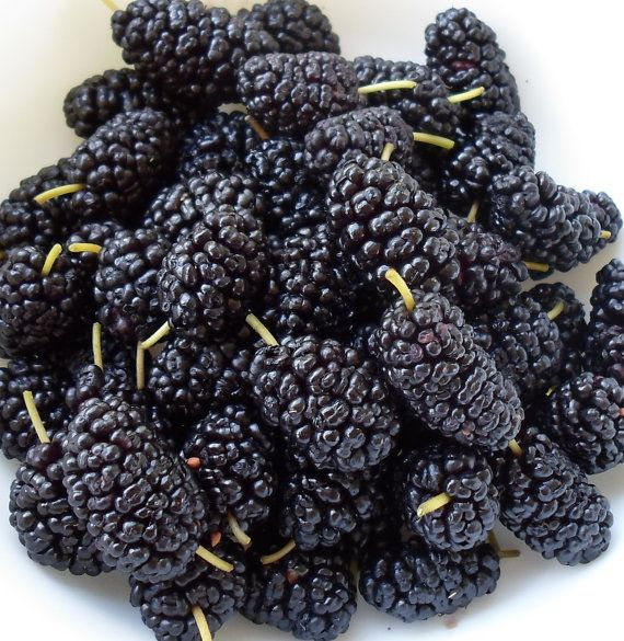 1oz  MULBERRY JAM  Candle fragrance scent by ThePlace4Candles
