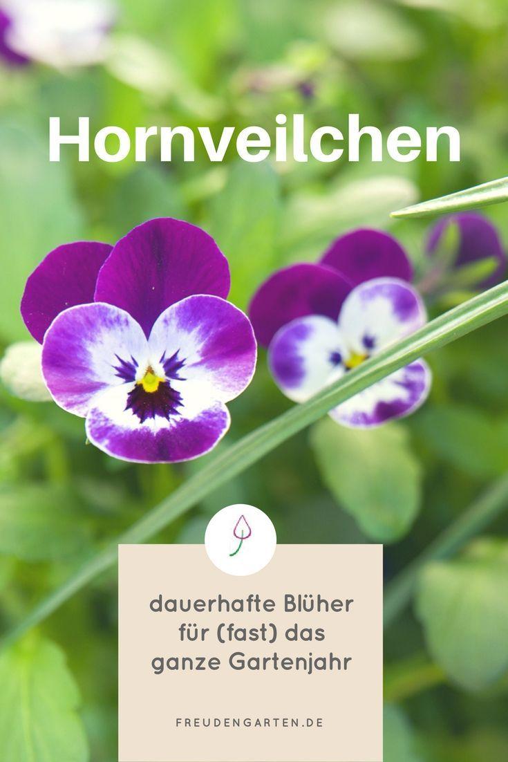 Pin Von Chizoba Margaux Auf Pflanzen Hornveilchen Blumen Fur Garten Gartenarbeit Fur Anfanger