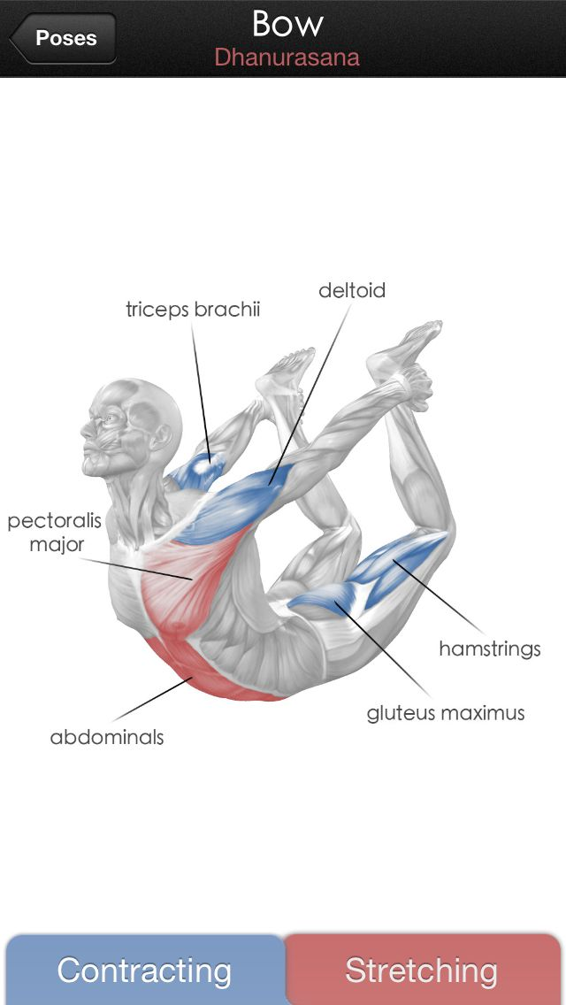 Bow pose ~ which muscles stretch and contract #yoga