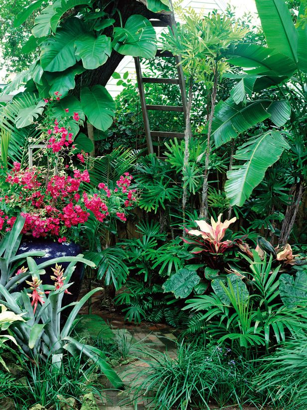 131 best images about tropical gardens on pinterest