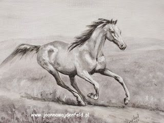 Galeria konie - Joanna Wajdenfeld