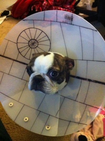 Star Wars Dog costumes -- as if wearing a plain cone-head isn't
