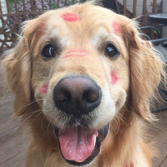 The only kind of marks you should ever leave on your dog.I can see why your momma couldn't resist kissing that face!