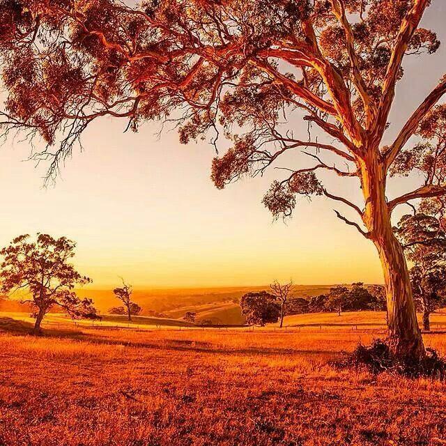 Goolwa, Sth Australia.