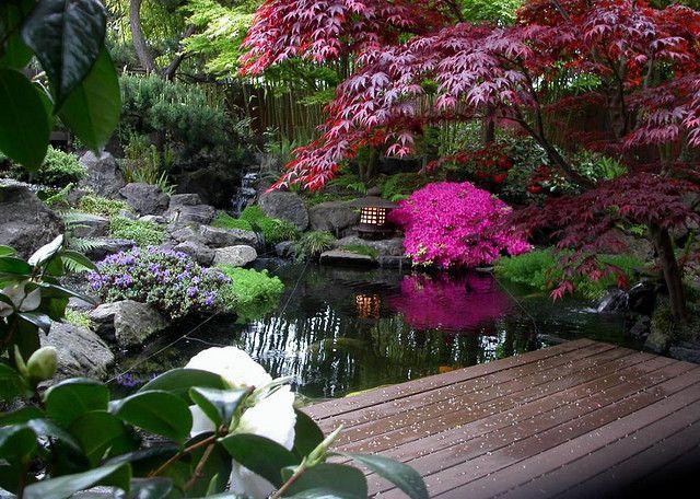 Japanese garden landscape pond view from deck