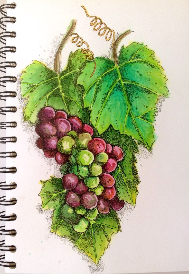 17 best images about grape art on pinterest vineyard for Buy grape vines for crafts
