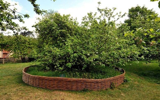 the apple tree which inspired Newton's theory of gravity – a thirty minute drive from two chapel lane